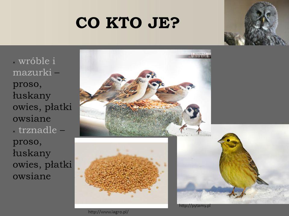  wróble i mazurki – proso, łuskany owies, płatki owsiane  trznadle – proso, łuskany owies, płatki owsiane CO KTO JE? http://www.iagro.pl/ http://pyt
