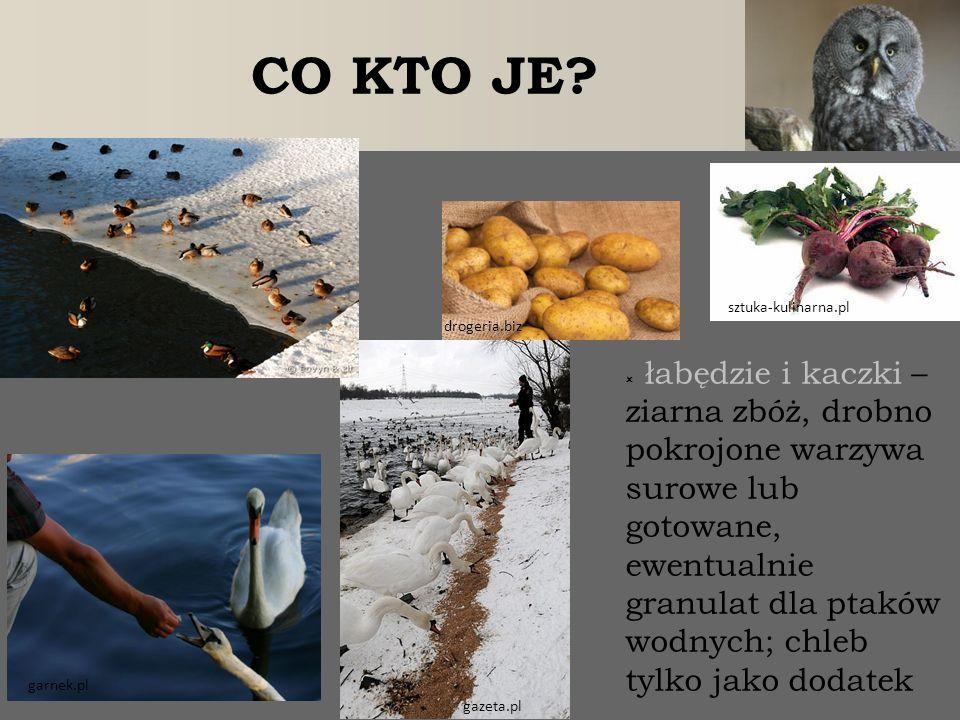  łabędzie i kaczki – ziarna zbóż, drobno pokrojone warzywa surowe lub gotowane, ewentualnie granulat dla ptaków wodnych; chleb tylko jako dodatek CO