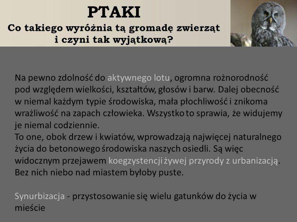 OCHRONA PTAKÓW Wszystkie gatunki dziko żyjących ptaków podlegają w Polsce ochronie prawnej.