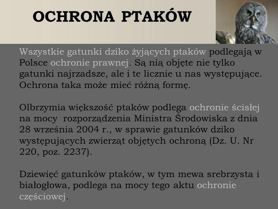 OCHRONA PTAKÓW Wszystkie gatunki dziko żyjących ptaków podlegają w Polsce ochronie prawnej. Są nią objęte nie tylko gatunki najrzadsze, ale i te liczn