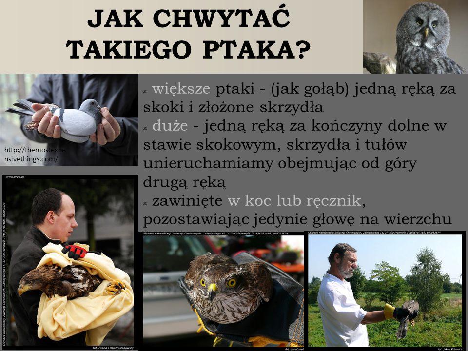 http://themostexpe nsivethings.com/  większe ptaki - (jak gołąb) jedną ręką za skoki i złożone skrzydła  duże - jedną ręką za kończyny dolne w stawi