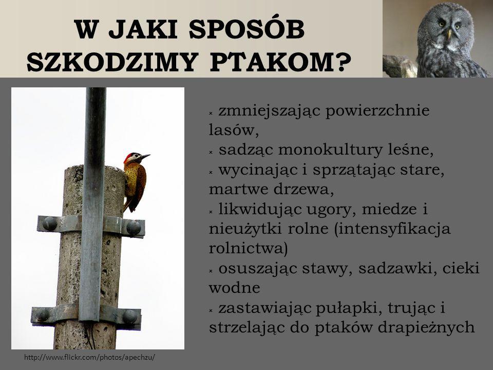 ZIMOWANIE PTAKÓW WODNYCH W MIASTACH I ICH DOKARMIANIE  jest to zjawisko nowe, przybierające na sile; związane z dokarmianiem ptaków - czy korzystne.
