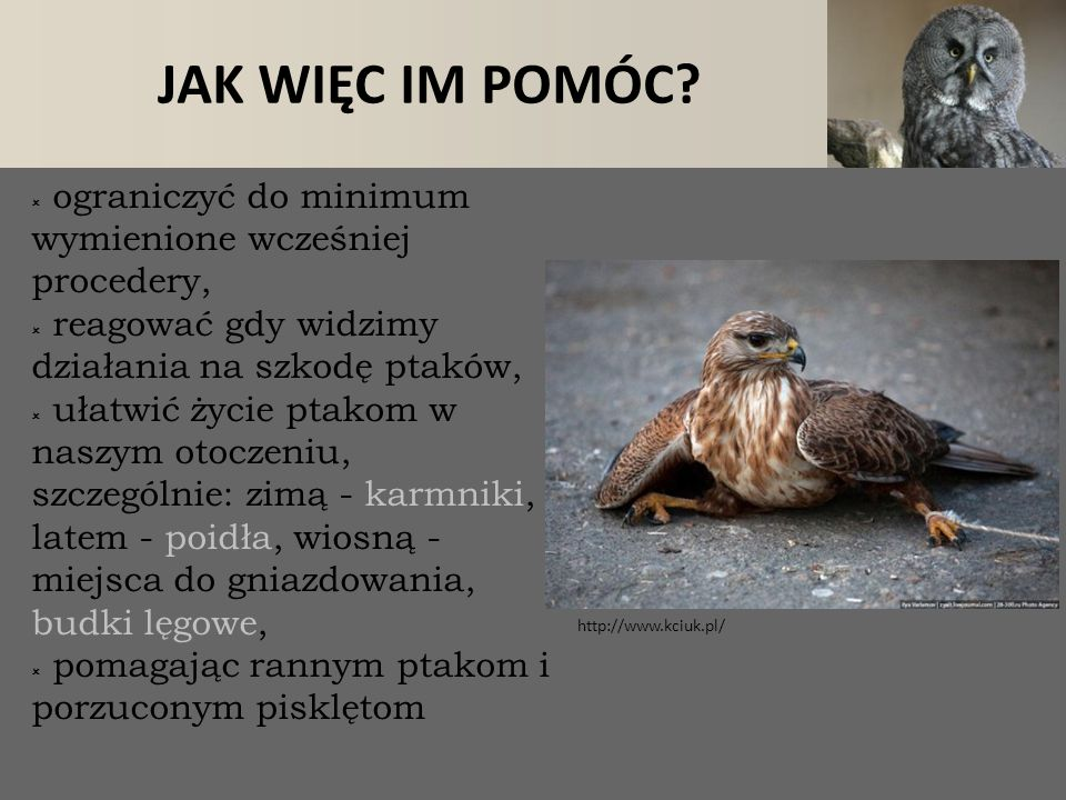 JAK WIĘC IM POMÓC?  ograniczyć do minimum wymienione wcześniej procedery,  reagować gdy widzimy działania na szkodę ptaków,  ułatwić życie ptakom w