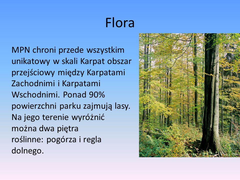 Flora MPN chroni przede wszystkim unikatowy w skali Karpat obszar przejściowy między Karpatami Zachodnimi i Karpatami Wschodnimi. Ponad 90% powierzchn
