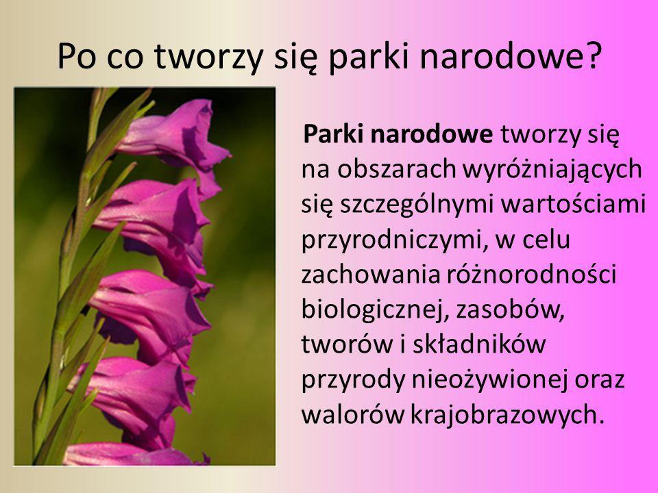 Po co tworzy się parki narodowe? Parki narodowe tworzy się na obszarach wyróżniających się szczególnymi wartościami przyrodniczymi, w celu zachowania