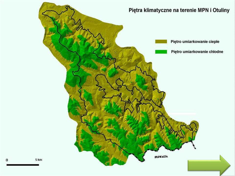 Flora MPN chroni przede wszystkim unikatowy w skali Karpat obszar przejściowy między Karpatami Zachodnimi i Karpatami Wschodnimi.