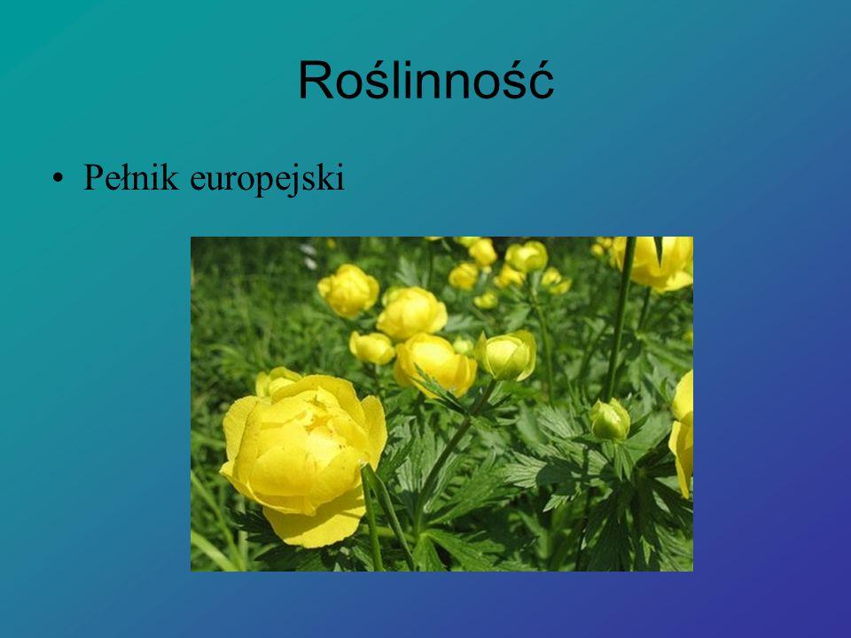 Roślinność Pełnik europejski