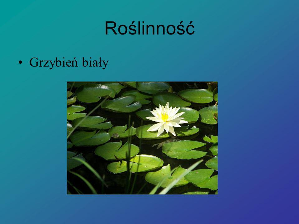 Cele powstania rezerwatu Celem ochrony jest zachowanie zespołu łęgu jesionowo – olszowego, gatunków roślin chronionych oraz licznych drzew pomnikowych.
