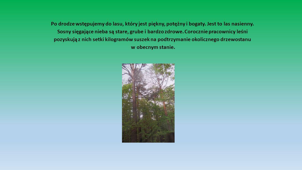 Po drodze wstępujemy do lasu, który jest piękny, potężny i bogaty.