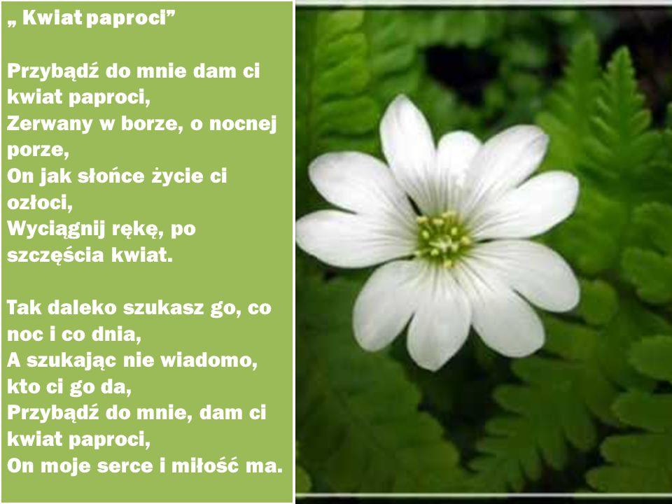 """"""" Kwiat paproci"""" Przybądź do mnie dam ci kwiat paproci, Zerwany w borze, o nocnej porze, On jak słońce życie ci ozłoci, Wyciągnij rękę, po szczęścia k"""