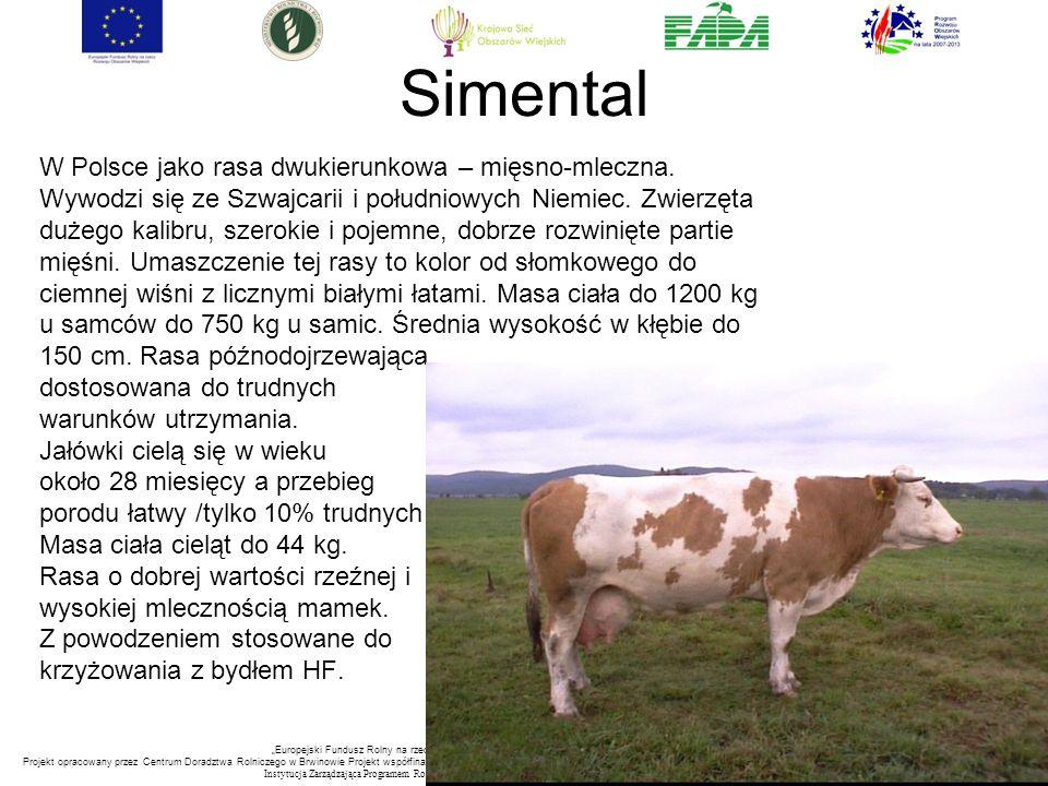 """""""Europejski Fundusz Rolny na rzecz Rozwoju Obszarów Wiejskich: Europa inwestująca w obszary wiejskie. Projekt opracowany przez Centrum Doradztwa Rolniczego w Brwinowie Projekt współfinansowany ze środków Unii Europejskiej w ramach Pomocy Technicznej Programu Rozwoju Obszarów Wiejskich na lata 2007-2013 Instytucja Zarządzająca Programem Rozwoju Obszar ó w Wiejskich na lata 2007-2013 -Minister Rolnictwa i Rozwoju Wsi Simental W Polsce jako rasa dwukierunkowa – mięsno-mleczna."""