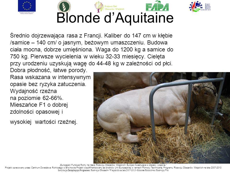 """""""Europejski Fundusz Rolny na rzecz Rozwoju Obszarów Wiejskich: Europa inwestująca w obszary wiejskie. Projekt opracowany przez Centrum Doradztwa Rolniczego w Brwinowie Projekt współfinansowany ze środków Unii Europejskiej w ramach Pomocy Technicznej Programu Rozwoju Obszarów Wiejskich na lata 2007-2013 Instytucja Zarządzająca Programem Rozwoju Obszar ó w Wiejskich na lata 2007-2013 -Minister Rolnictwa i Rozwoju Wsi Blonde d'Aquitaine Średnio dojrzewająca rasa z Francji."""