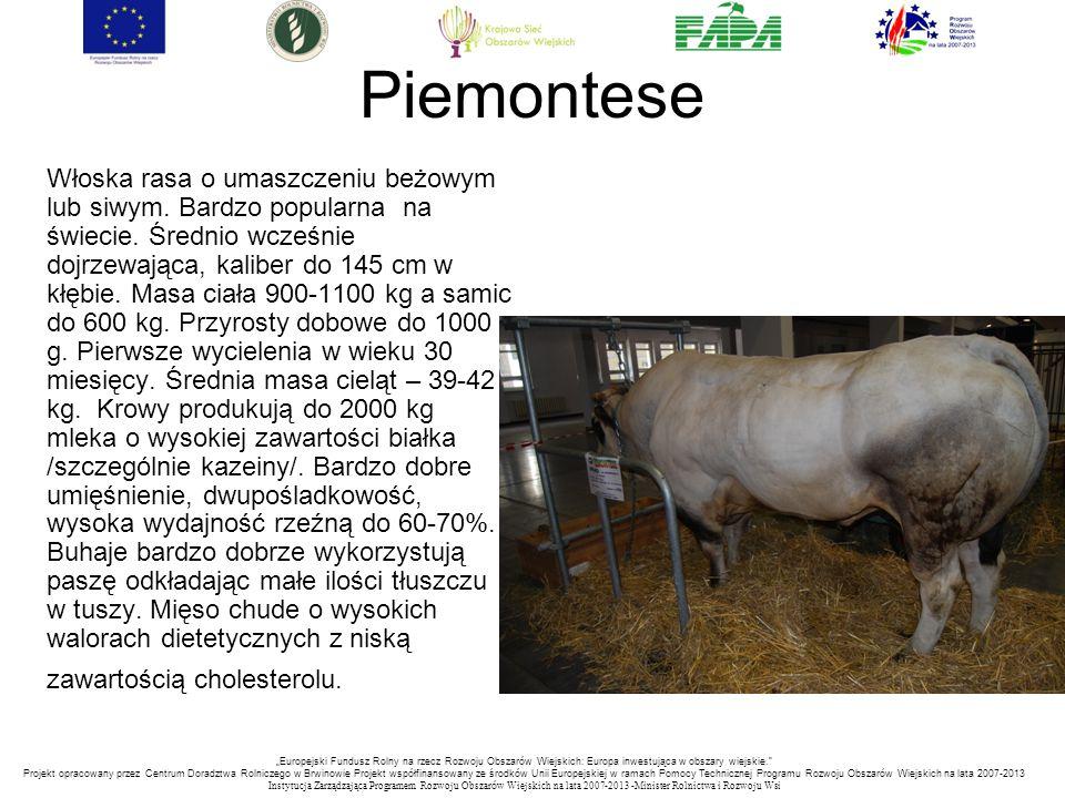 """""""Europejski Fundusz Rolny na rzecz Rozwoju Obszarów Wiejskich: Europa inwestująca w obszary wiejskie. Projekt opracowany przez Centrum Doradztwa Rolniczego w Brwinowie Projekt współfinansowany ze środków Unii Europejskiej w ramach Pomocy Technicznej Programu Rozwoju Obszarów Wiejskich na lata 2007-2013 Instytucja Zarządzająca Programem Rozwoju Obszar ó w Wiejskich na lata 2007-2013 -Minister Rolnictwa i Rozwoju Wsi Piemontese Włoska rasa o umaszczeniu beżowym lub siwym."""