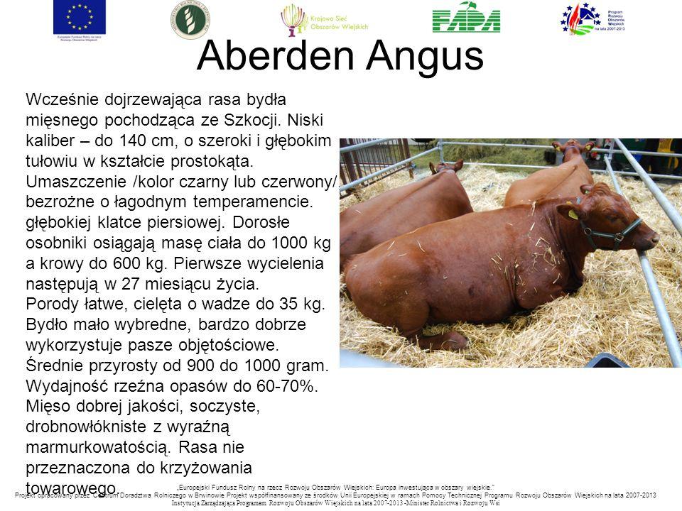 """""""Europejski Fundusz Rolny na rzecz Rozwoju Obszarów Wiejskich: Europa inwestująca w obszary wiejskie. Projekt opracowany przez Centrum Doradztwa Rolniczego w Brwinowie Projekt współfinansowany ze środków Unii Europejskiej w ramach Pomocy Technicznej Programu Rozwoju Obszarów Wiejskich na lata 2007-2013 Instytucja Zarządzająca Programem Rozwoju Obszar ó w Wiejskich na lata 2007-2013 -Minister Rolnictwa i Rozwoju Wsi Aberden Angus Wcześnie dojrzewająca rasa bydła mięsnego pochodząca ze Szkocji."""