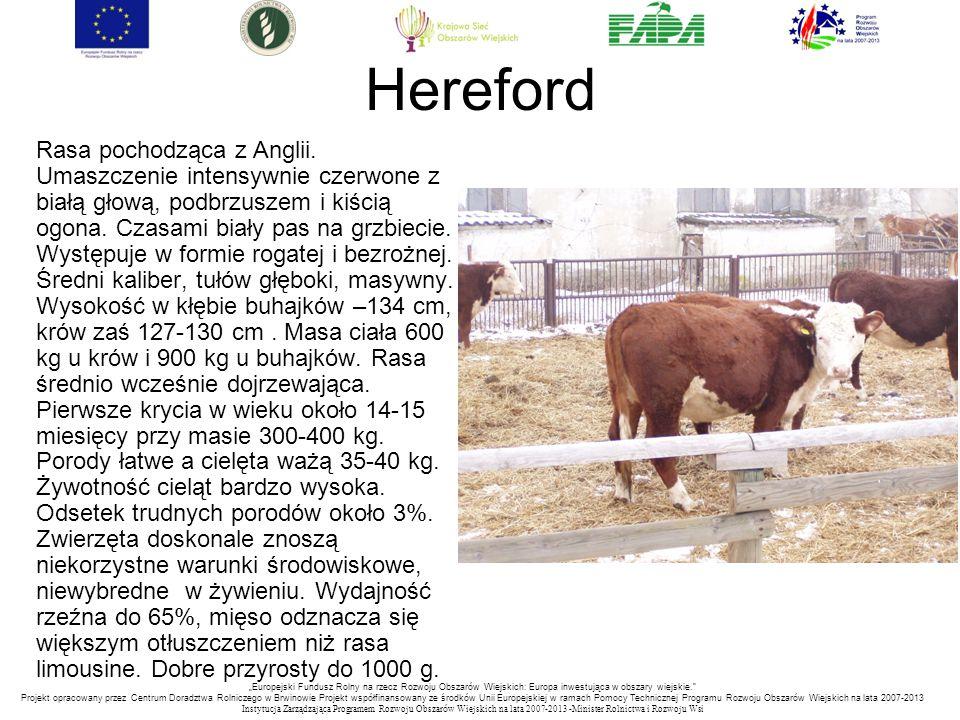 """""""Europejski Fundusz Rolny na rzecz Rozwoju Obszarów Wiejskich: Europa inwestująca w obszary wiejskie. Projekt opracowany przez Centrum Doradztwa Rolniczego w Brwinowie Projekt współfinansowany ze środków Unii Europejskiej w ramach Pomocy Technicznej Programu Rozwoju Obszarów Wiejskich na lata 2007-2013 Instytucja Zarządzająca Programem Rozwoju Obszar ó w Wiejskich na lata 2007-2013 -Minister Rolnictwa i Rozwoju Wsi Hereford Rasa pochodząca z Anglii."""
