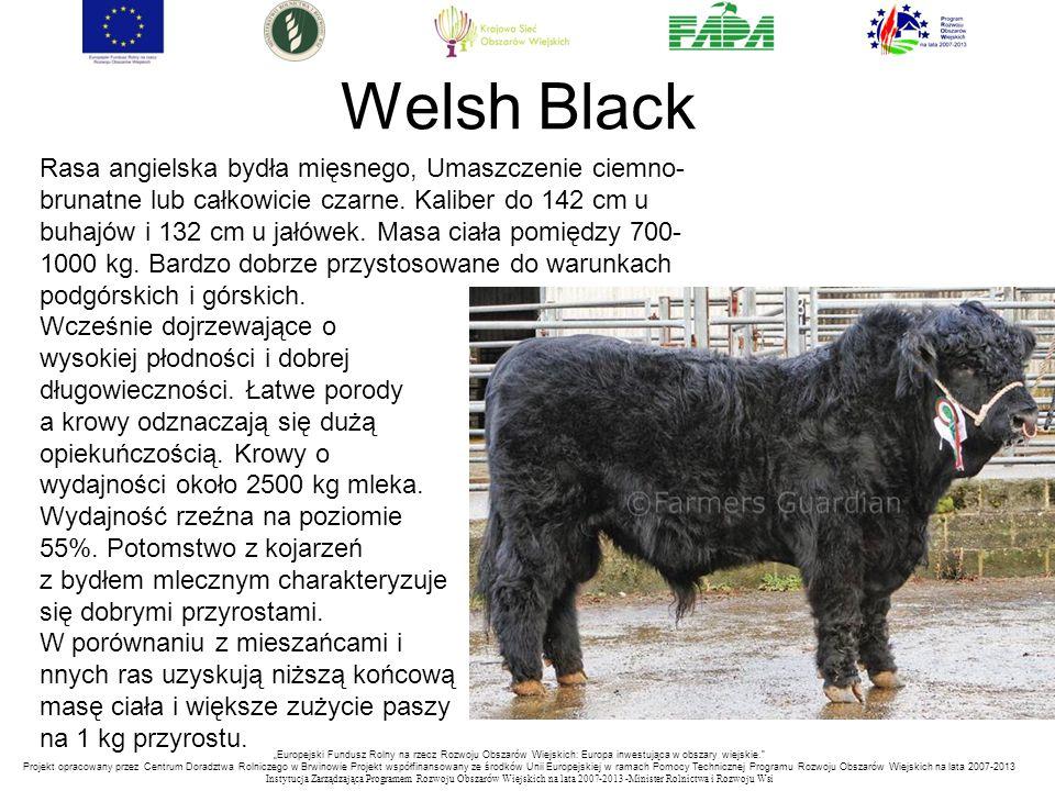 """""""Europejski Fundusz Rolny na rzecz Rozwoju Obszarów Wiejskich: Europa inwestująca w obszary wiejskie. Projekt opracowany przez Centrum Doradztwa Rolniczego w Brwinowie Projekt współfinansowany ze środków Unii Europejskiej w ramach Pomocy Technicznej Programu Rozwoju Obszarów Wiejskich na lata 2007-2013 Instytucja Zarządzająca Programem Rozwoju Obszar ó w Wiejskich na lata 2007-2013 -Minister Rolnictwa i Rozwoju Wsi Welsh Black Rasa angielska bydła mięsnego, Umaszczenie ciemno- brunatne lub całkowicie czarne."""