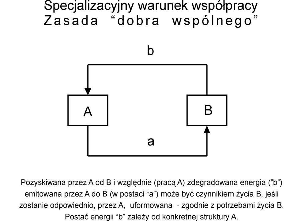 System ogólny L.von Bertalanffy'ego