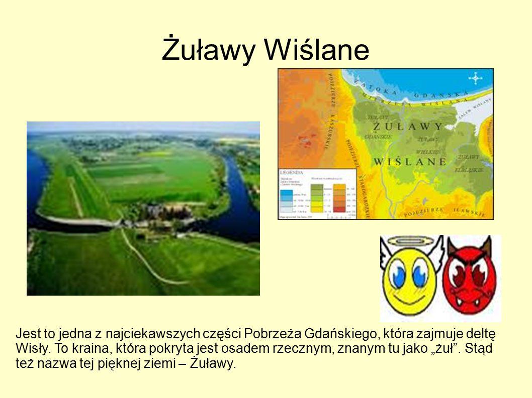 Żuławy Wiślane Jest to jedna z najciekawszych części Pobrzeża Gdańskiego, która zajmuje deltę Wisły.