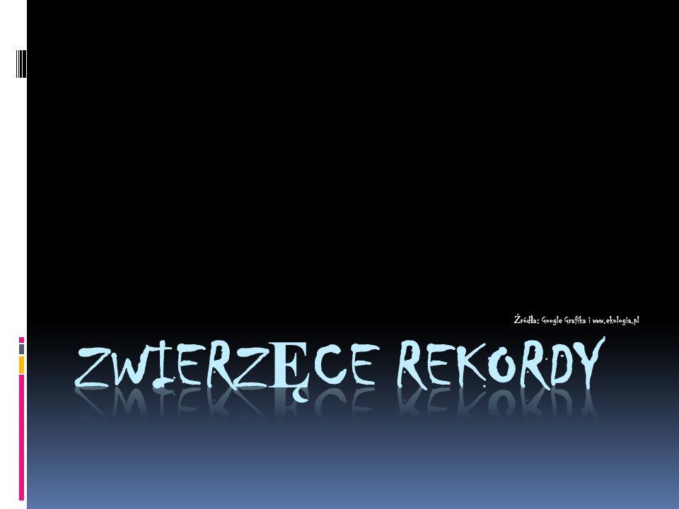 Ź ród ł a: Google Grafika i www.ekologia.pl