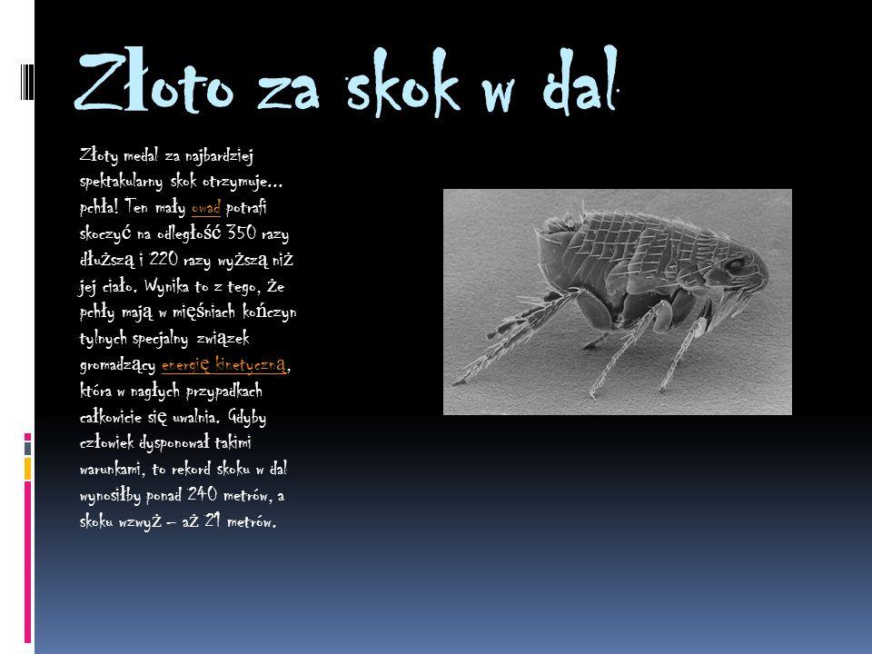 Szybki jak b ł yskawica Gepard króluje na l ą dzie, w wodzie prym wiedzie ż aglica, a w powietrzu? Bezsprzecznie najszybszym ptakiem, ale i zwierz ę c