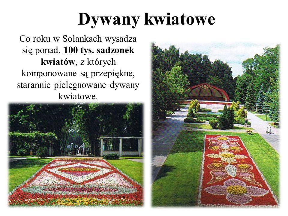 Dywany kwiatowe Co roku w Solankach wysadza się ponad.