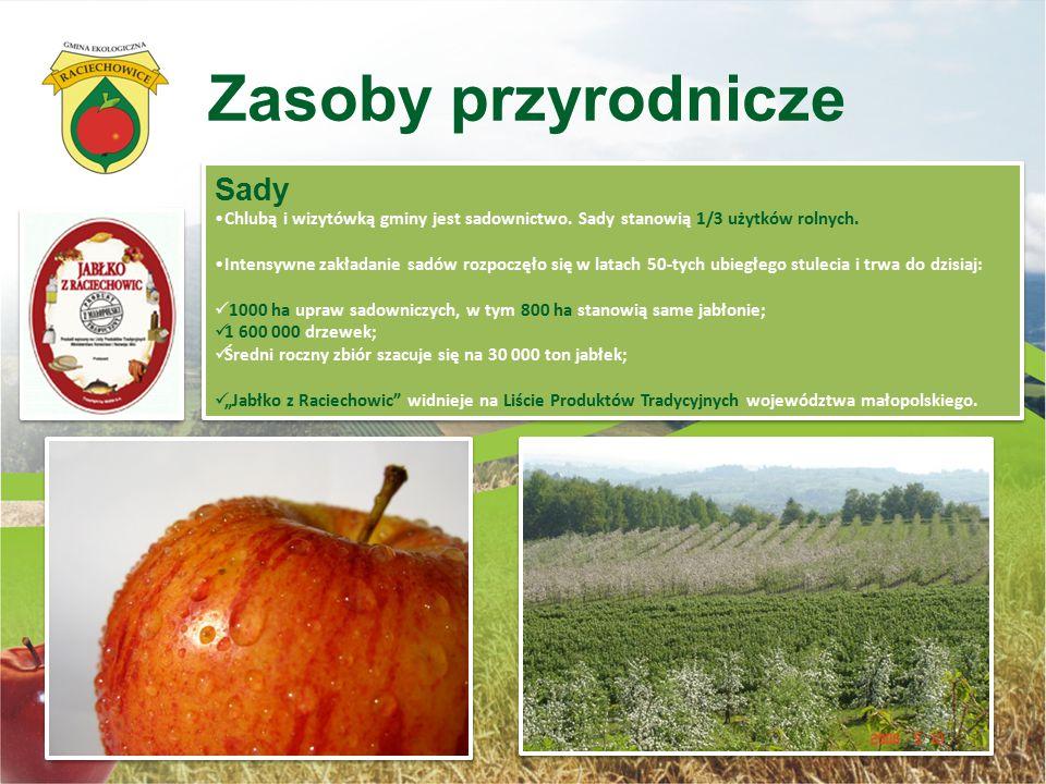 Sady Chlubą i wizytówką gminy jest sadownictwo. Sady stanowią 1/3 użytków rolnych. Intensywne zakładanie sadów rozpoczęło się w latach 50-tych ubiegłe