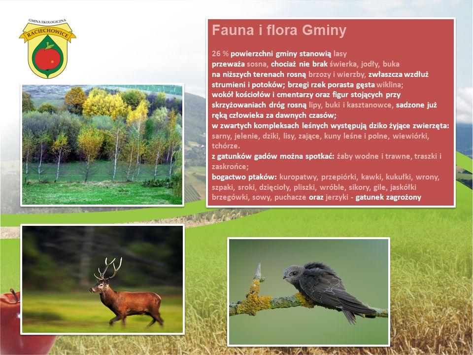 Fauna i flora Gminy 26 % powierzchni gminy stanowią lasy przeważa sosna, chociaż nie brak świerka, jodły, buka na niższych terenach rosną brzozy i wie