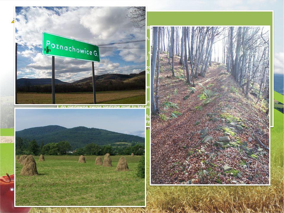 """Grodzisko najwyższe wzniesienie na terenie Gminy Raciechowice- 623 m n.p.m. stanowi """"bramę"""" do Beskidu Wyspowego, a jednocześnie nazwę porastającego g"""