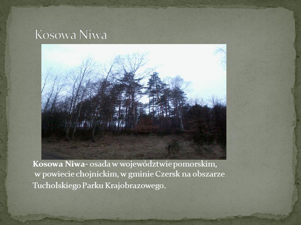 Kosowa Niwa- osada w województwie pomorskim, w powiecie chojnickim, w gminie Czersk na obszarze Tucholskiego Parku Krajobrazowego.