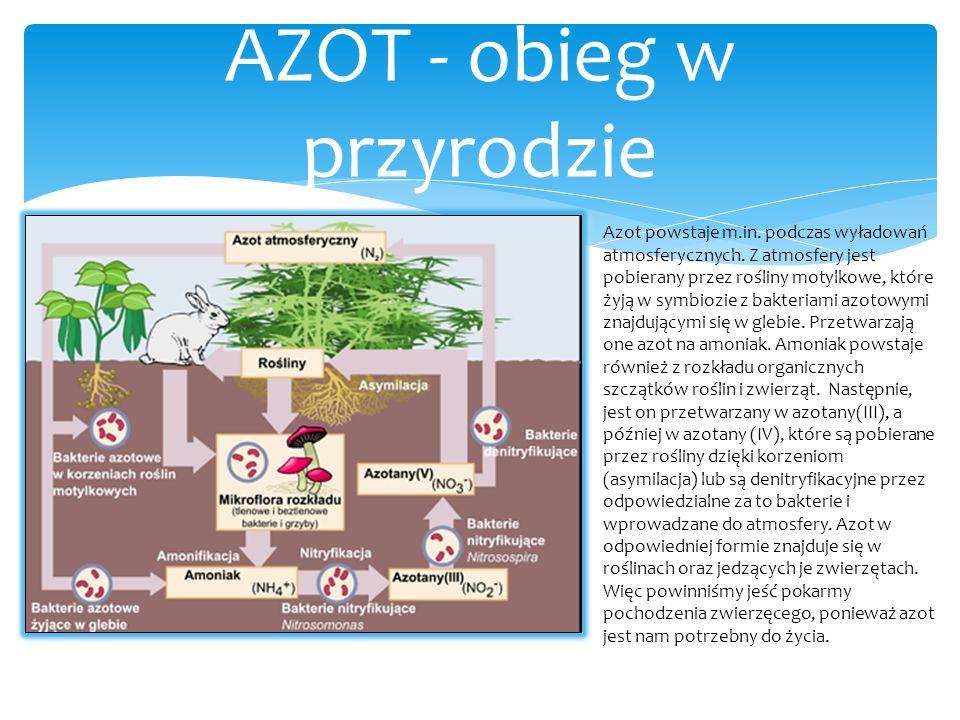 AZOT - obieg w przyrodzie Azot powstaje m.in. podczas wyładowań atmosferycznych. Z atmosfery jest pobierany przez rośliny motylkowe, które żyją w symb