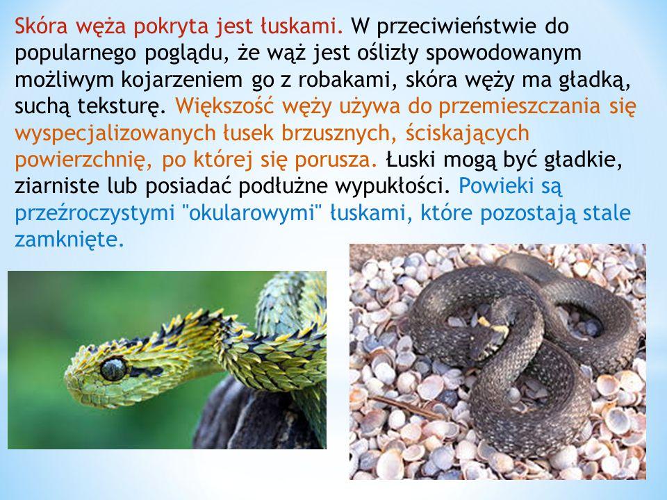 Skóra węża pokryta jest łuskami. W przeciwieństwie do popularnego poglądu, że wąż jest oślizły spowodowanym możliwym kojarzeniem go z robakami, skóra