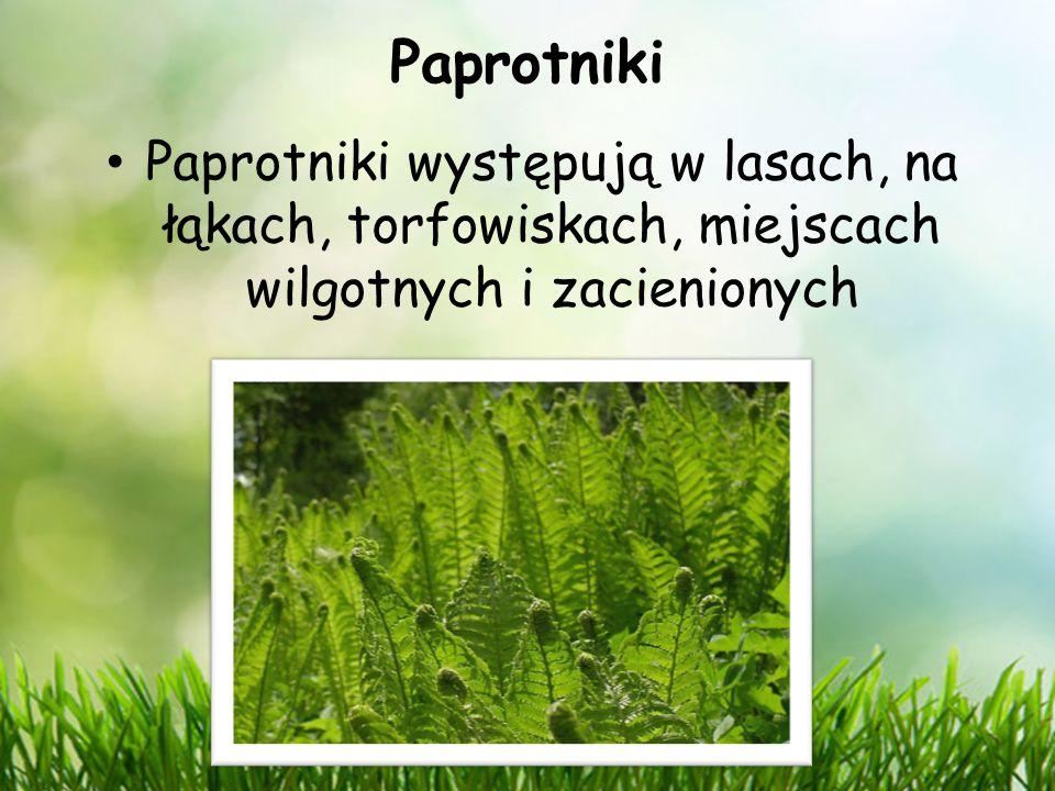 Paprotniki Paprotniki występują w lasach, na łąkach, torfowiskach, miejscach wilgotnych i zacienionych