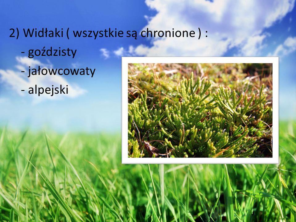 2) Widłaki ( wszystkie są chronione ) : - goździsty - jałowcowaty - alpejski