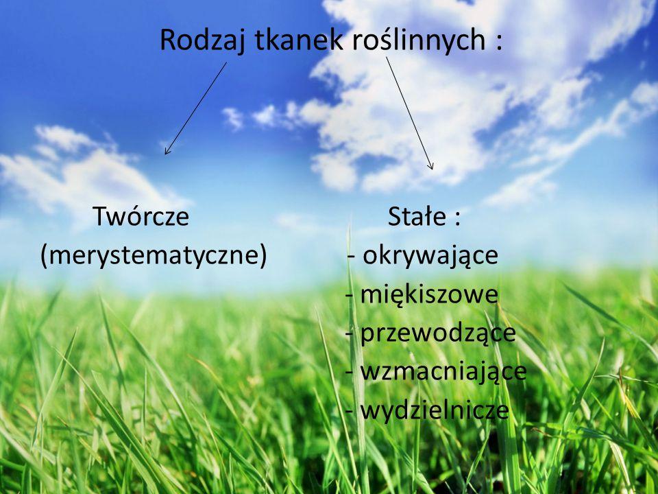 Twórcze Stałe : (merystematyczne) - okrywające - miękiszowe - przewodzące - wzmacniające - wydzielnicze Rodzaj tkanek roślinnych :