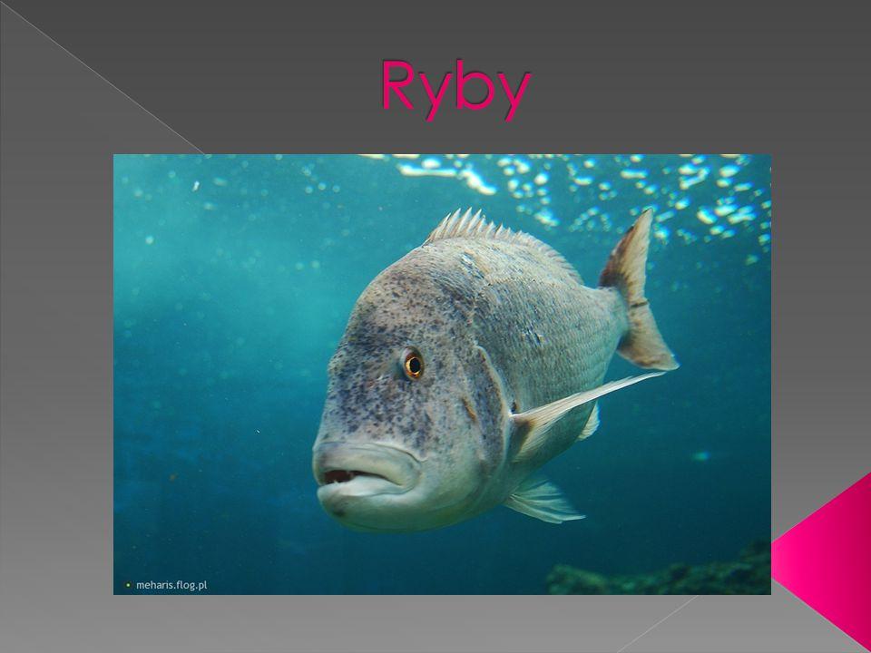  Ryby – tradycyjna nazwa zmiennocieplnych kręgowców wodnych oddychających skrzelami i poruszających się za pomocą płetw.