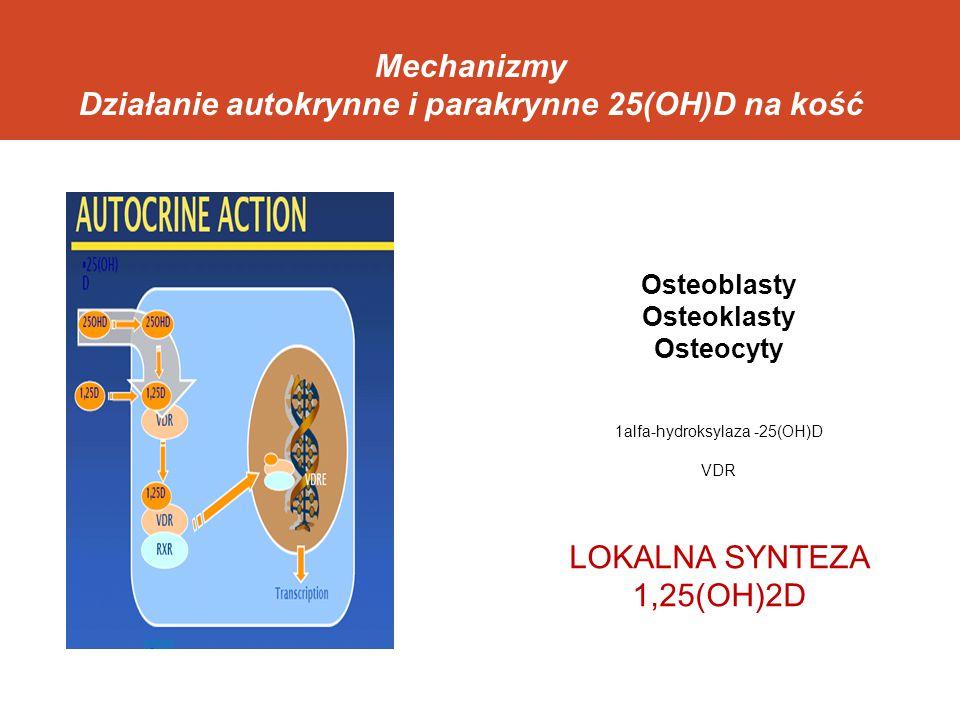 Mechanizmy Działanie autokrynne i parakrynne 25(OH)D na kość Osteoblasty Osteoklasty Osteocyty 1alfa-hydroksylaza -25(OH)D VDR LOKALNA SYNTEZA 1,25(OH