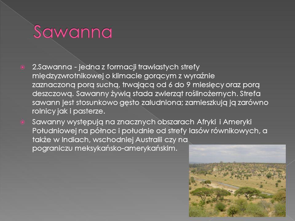  2.Sawanna - jedna z formacji trawiastych strefy międzyzwrotnikowej o klimacie gorącym z wyraźnie zaznaczoną porą suchą, trwającą od 6 do 9 miesięcy