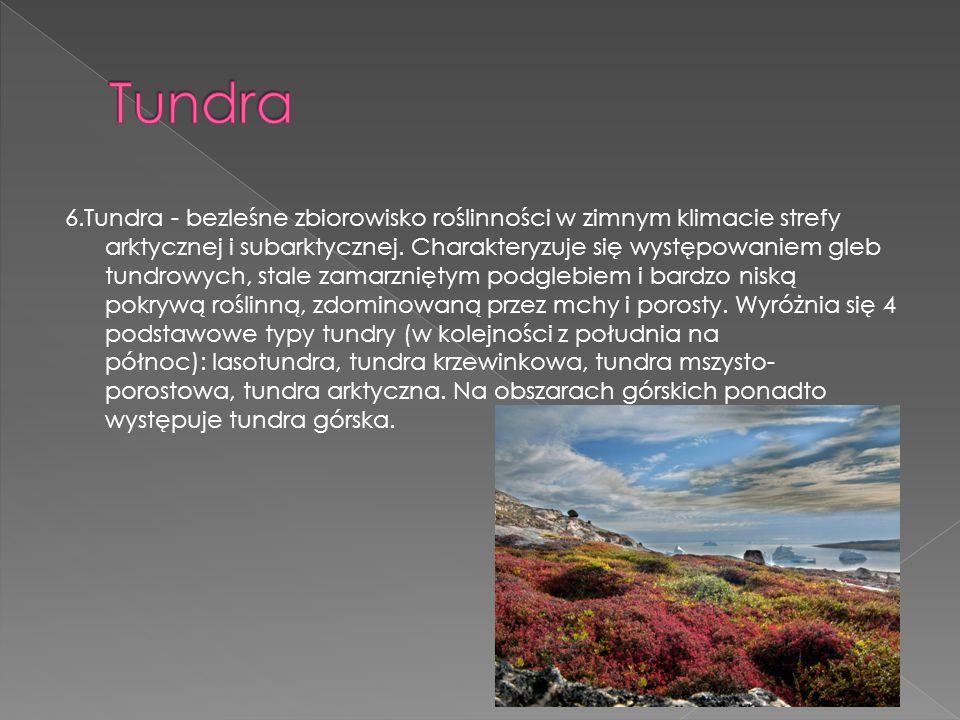 6.Tundra - bezleśne zbiorowisko roślinności w zimnym klimacie strefy arktycznej i subarktycznej. Charakteryzuje się występowaniem gleb tundrowych, sta