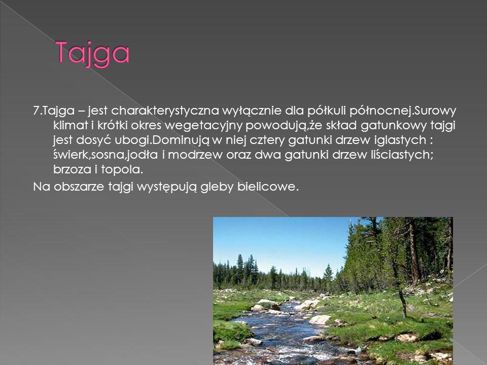 7.Tajga – jest charakterystyczna wyłącznie dla półkuli północnej.Surowy klimat i krótki okres wegetacyjny powodują,że skład gatunkowy tajgi jest dosyć