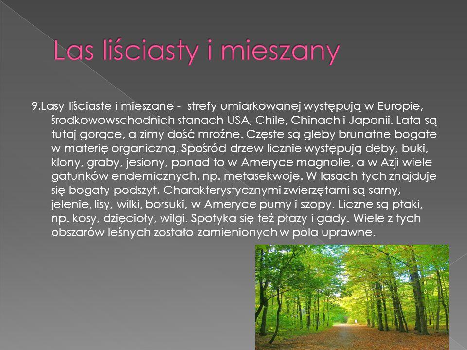 9.Lasy liściaste i mieszane - strefy umiarkowanej występują w Europie, środkowowschodnich stanach USA, Chile, Chinach i Japonii. Lata są tutaj gorące,