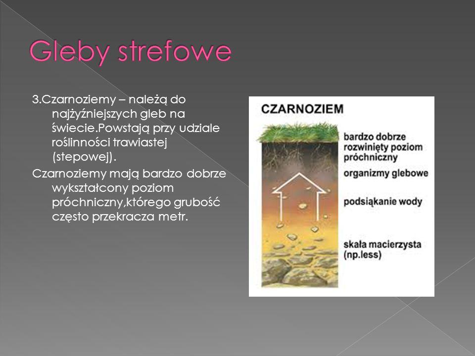 3.Czarnoziemy – należą do najżyźniejszych gleb na świecie.Powstają przy udziale roślinności trawiastej (stepowej). Czarnoziemy mają bardzo dobrze wyks