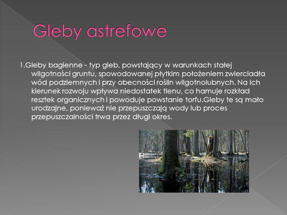 1.Gleby bagienne - typ gleb, powstający w warunkach stałej wilgotności gruntu, spowodowanej płytkim położeniem zwierciadła wód podziemnych i przy obec
