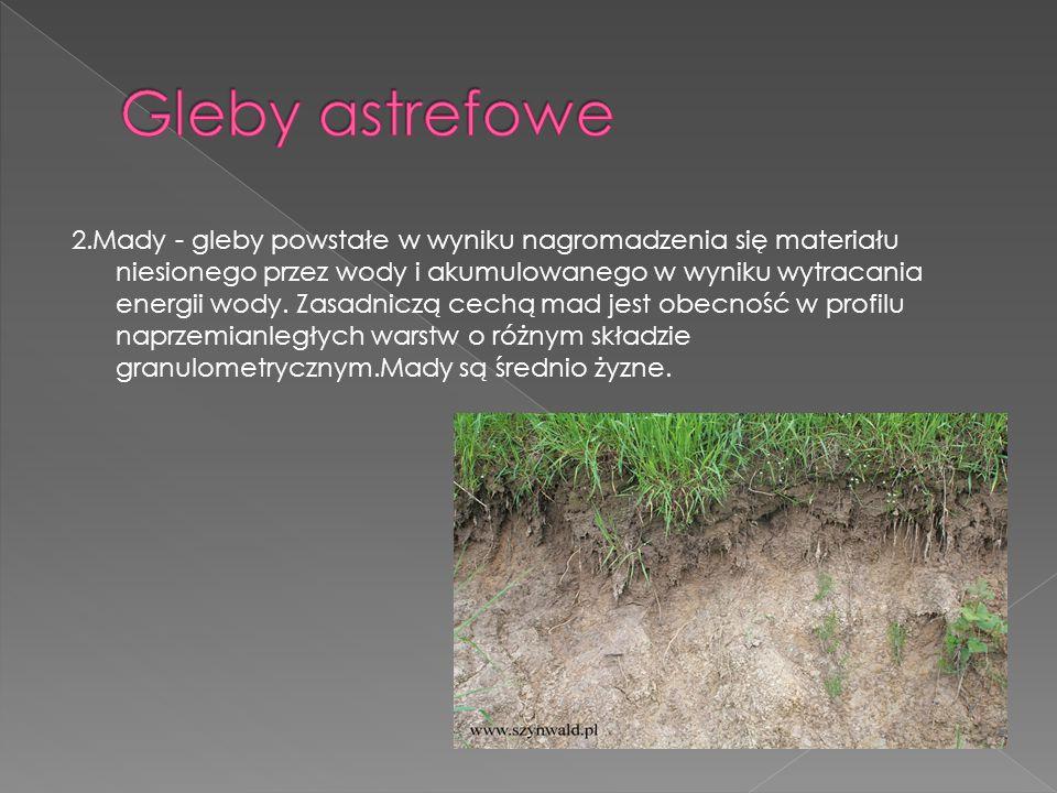 2.Mady - gleby powstałe w wyniku nagromadzenia się materiału niesionego przez wody i akumulowanego w wyniku wytracania energii wody. Zasadniczą cechą