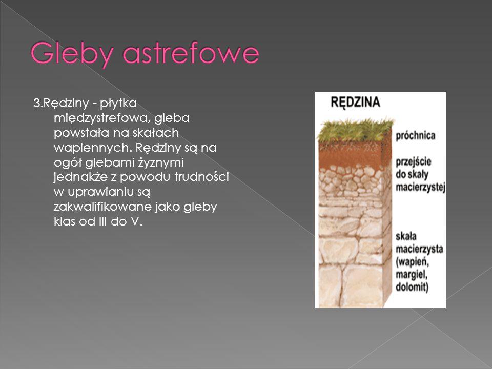 3.Rędziny - płytka międzystrefowa, gleba powstała na skałach wapiennych. Rędziny są na ogół glebami żyznymi jednakże z powodu trudności w uprawianiu s