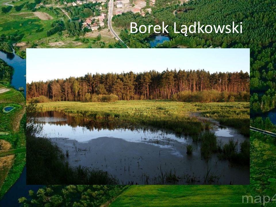 Borek Lądkowski