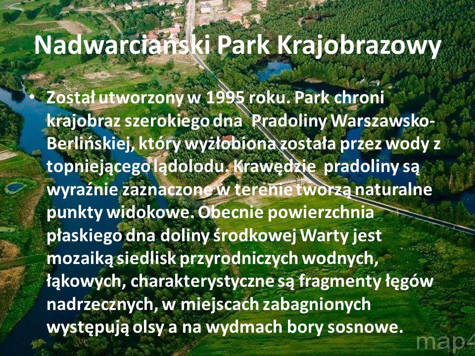 Nadwarciański Park Krajobrazowy Został utworzony w 1995 roku. Park chroni krajobraz szerokiego dna Pradoliny Warszawsko- Berlińskiej, który wyżłobiona