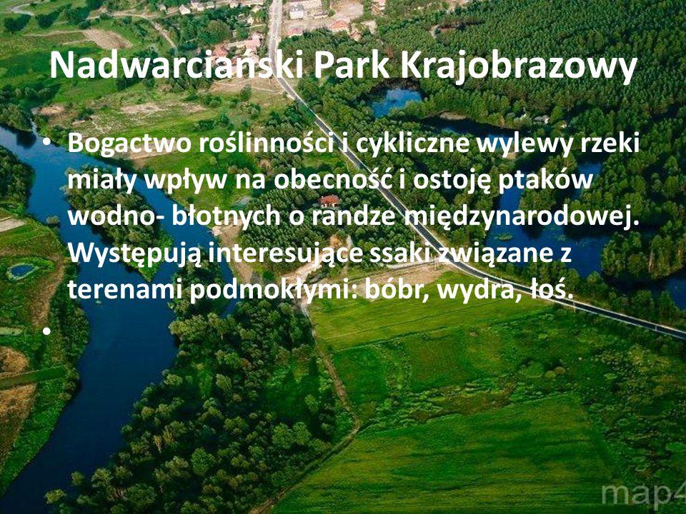 Nadwarciański Park Krajobrazowy Bogactwo roślinności i cykliczne wylewy rzeki miały wpływ na obecność i ostoję ptaków wodno- błotnych o randze międzyn