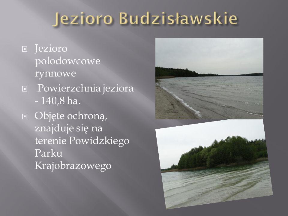  Jezioro polodowcowe rynnowe  Powierzchnia jeziora - 140,8 ha.  Objęte ochroną, znajduje się na terenie Powidzkiego Parku Krajobrazowego