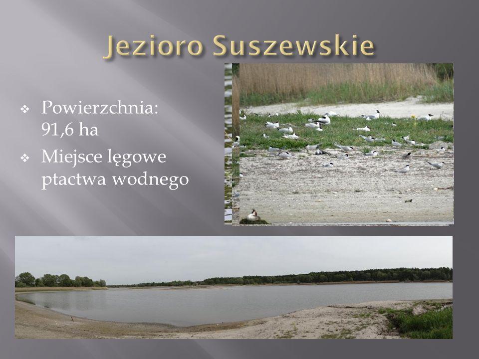  Powierzchnia: 91,6 ha  Miejsce lęgowe ptactwa wodnego