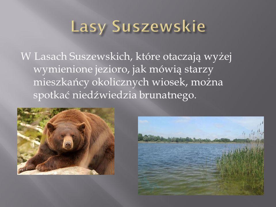 W Lasach Suszewskich, które otaczają wyżej wymienione jezioro, jak mówią starzy mieszkańcy okolicznych wiosek, można spotkać niedźwiedzia brunatnego.